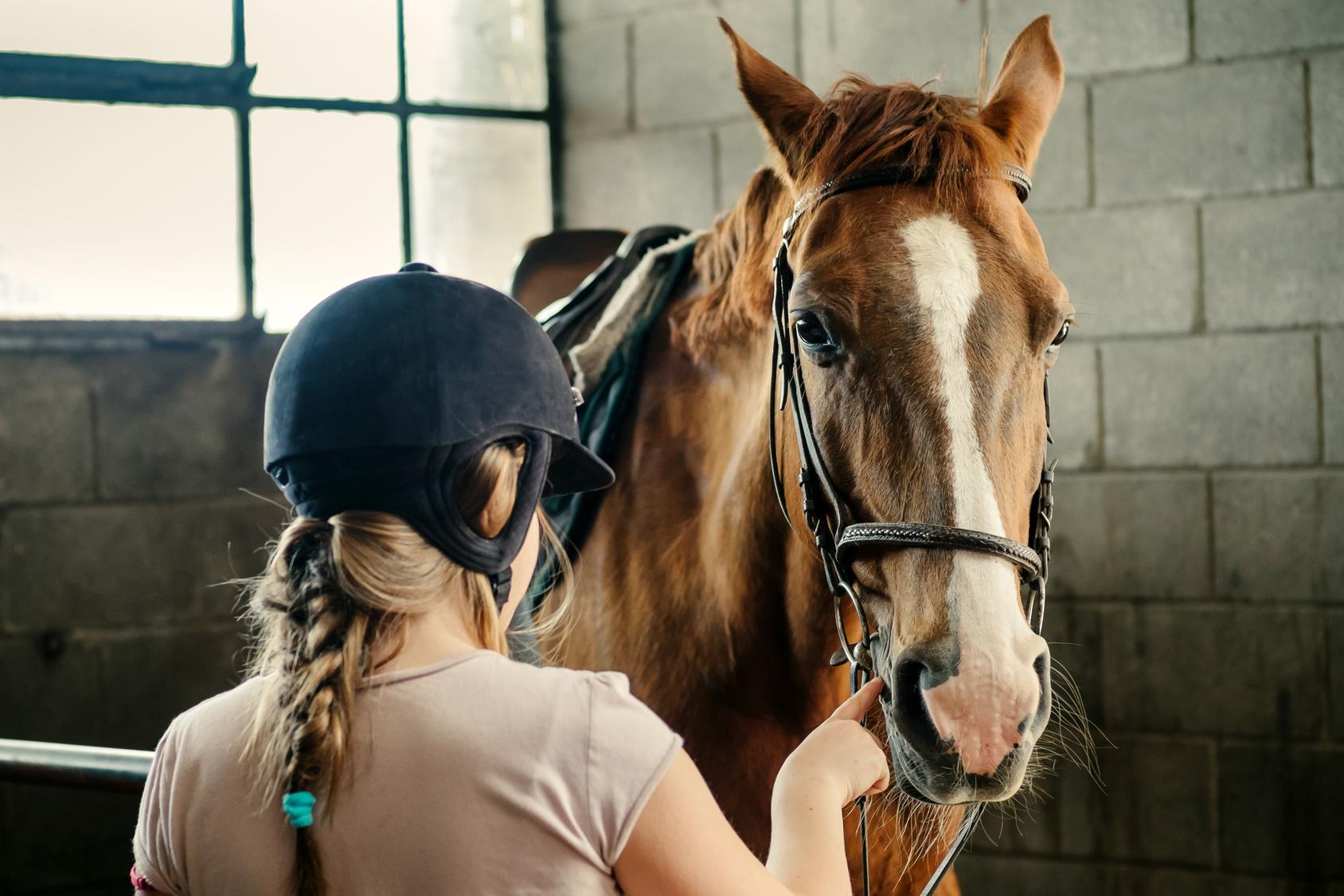 Breve storia del cavallo e le corse