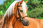 Rubrica cavalli