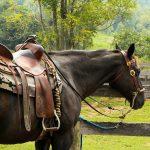 equipaggiamenti-cavallo