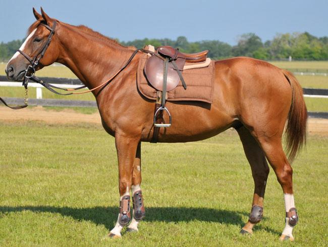 Scegliere la migliore sella cavallo