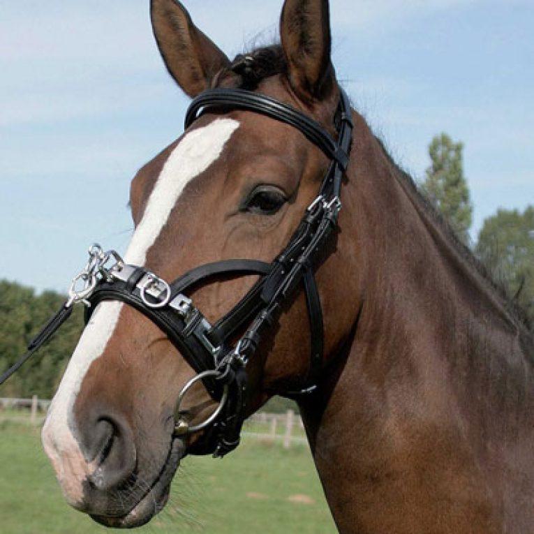 Capezzone cavallo