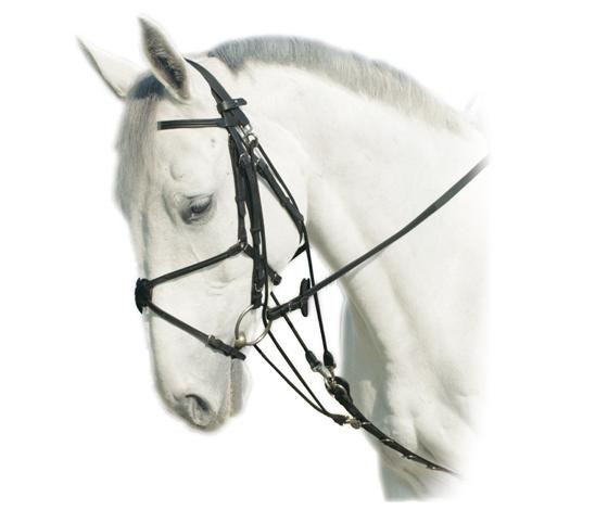 Finimenti cavallo monta inglese