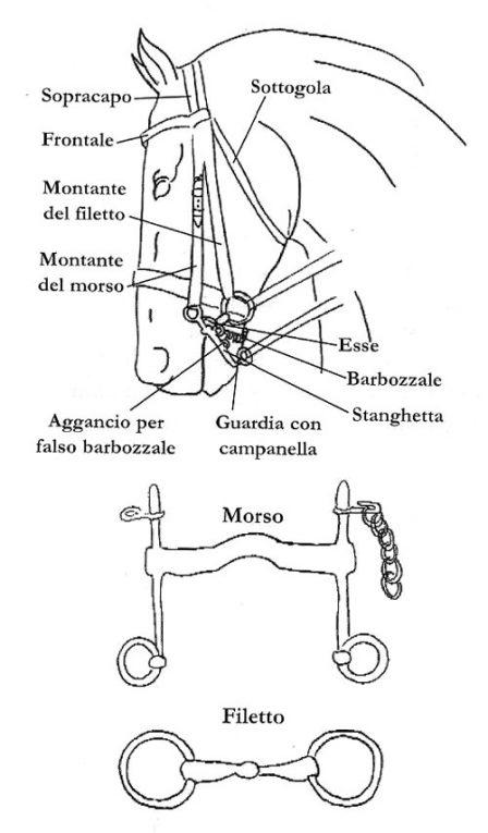 Componenti testiera cavallo