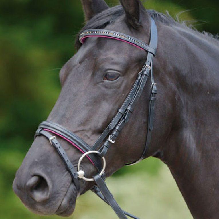 Testiera cavallo