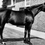 cavalli storici nearco ribot grundy