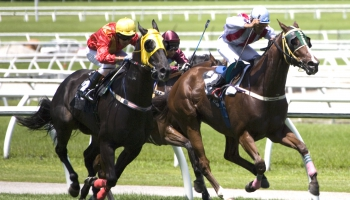 Dove e come scommettere sulle corse dei cavalli in Italia