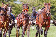 Corsa Tris  e Ippica Nazionale – regolamenti