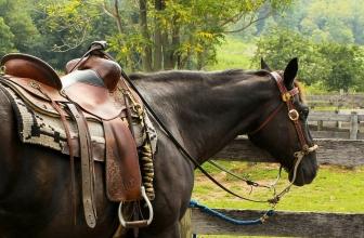L'equipaggiamento da equitazione