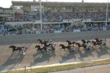Corse Cavalli Bologna: Ippodromo Arcoveggio (Trotto) BO