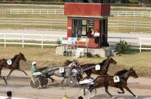 Corse Cavalli Ferrara: Ippodromo Comunale (Trotto) FE