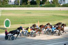 Corse Cavalli Ravenna: Ippodromo Candiano (Trotto) RA