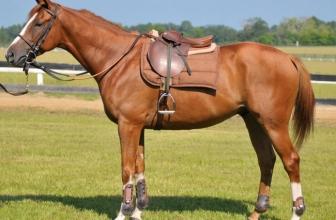 La scelta della miglior sella per cavallo